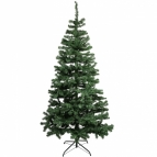 Douglas fir tree (2.1m/ 7ft)